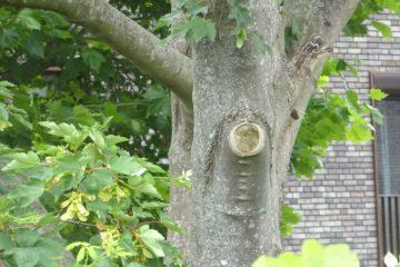 Helpen zoals Groningen helpt tak van boom gezaagd